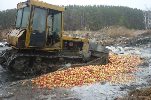 Кто «подставил» санкционные польские яблоки?