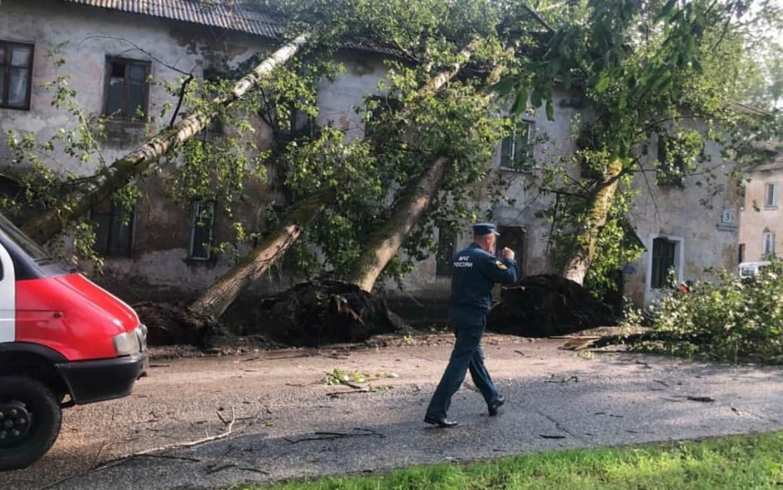 В Теплоозерске сильный ветер повалил деревья