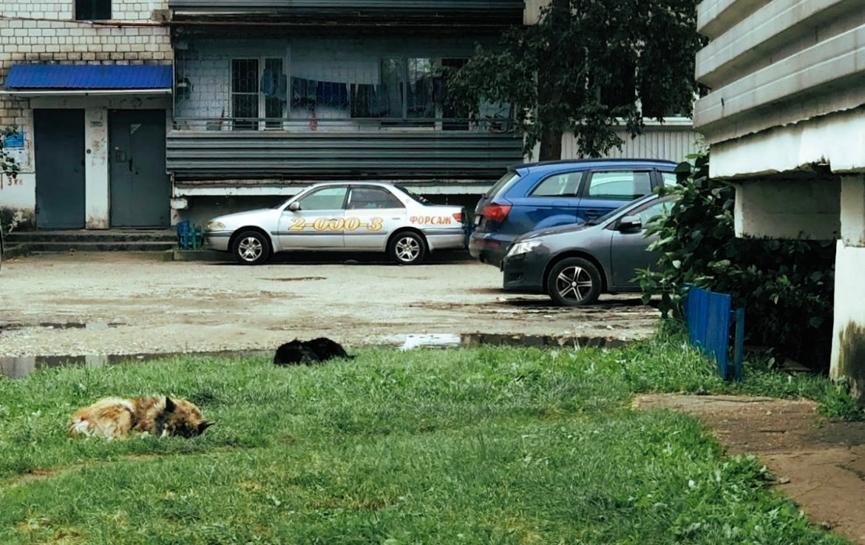 Стая собак из ведомственного объекта напрягает жителей многоэтажки в Биробиджане (ВИДЕО)