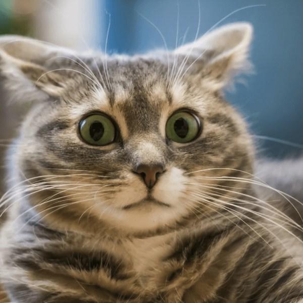 """Биробиджанка рассчитывала получить деньги за продажу котенка, но заплатила """"покупательнице"""" сама"""