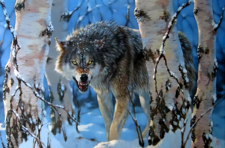 «Вдруг я не смогу задушить волка голыми руками?» – краткий гайд для тех, кто хочет знать, как вести себя при встрече с хищником