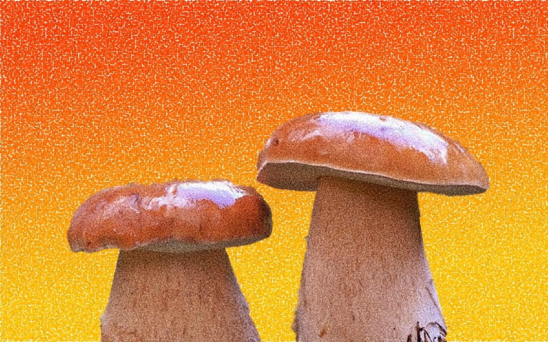 Собираетесь за грибами? Оставьте дома ведра и полиэтиленовые пакеты