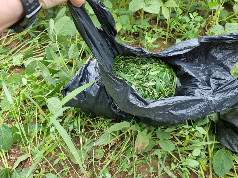Заготовка легких наркотиков в самом разгаре в ЕАО: биробиджанец спрятал марихуану в собачью будку, а жительницы Найфельда на велосипедах поехали за орехами и грибами, но вернулись с канабисом