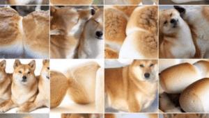 マシュマロ 柴犬