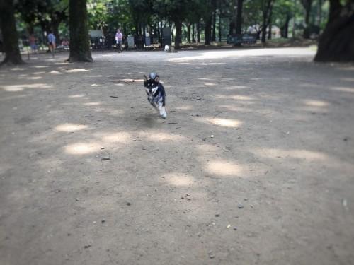 代々木公園 ドッグラン