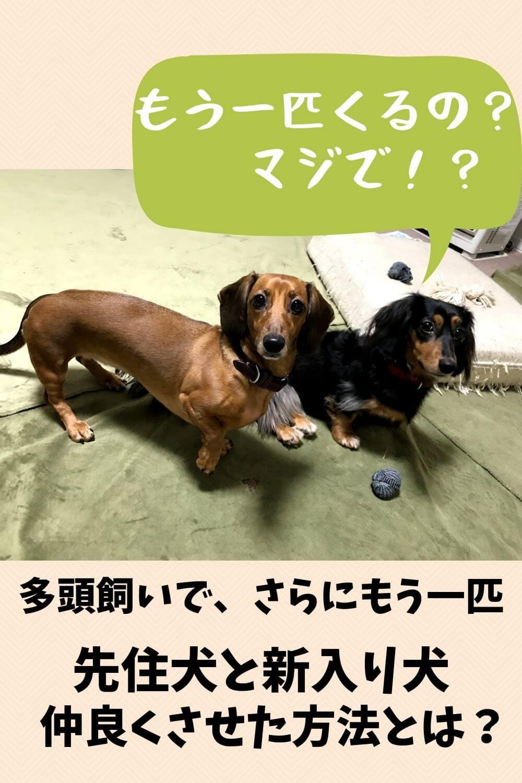 先住犬と新入りを仲良くさせる