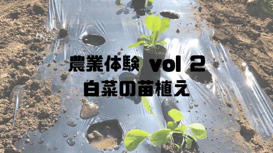農業体験 vol2 白菜の苗植え
