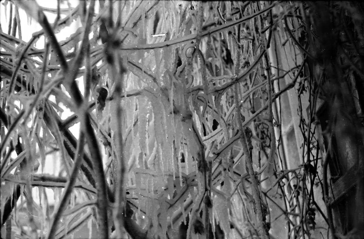 Zimowe fantazje