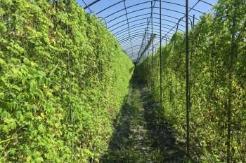 花蓮壽豐景點 江玉寶山苦瓜  友善耕作的山苦瓜與國宴百合 有機小農 內有粉絲獨特優惠