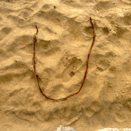 The letter U from a stick found on the beach.