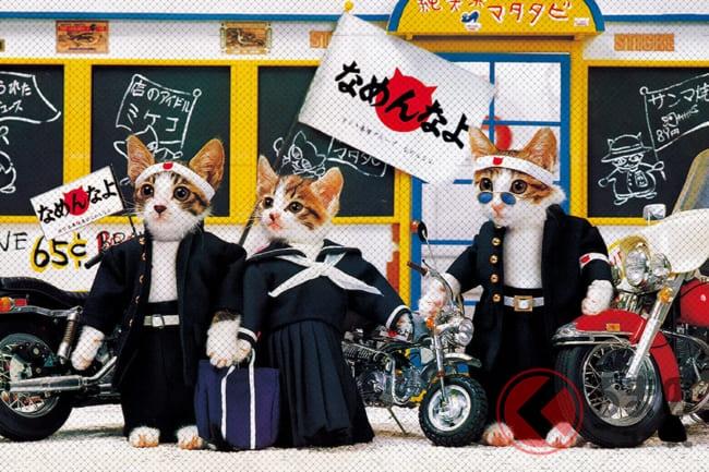 みんな持っていた「なめ猫免許」 現在も密かなブームだった? | くるまのニュース - (2)