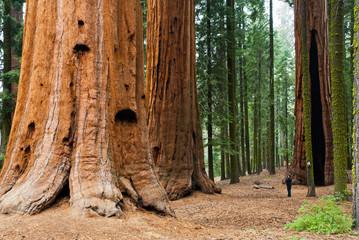 古代の地球は巨木世界だった確かな証拠【この地球に山は森はなかった】