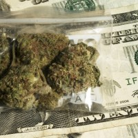 The 7 Most Expensive Cannabis Strains in the World