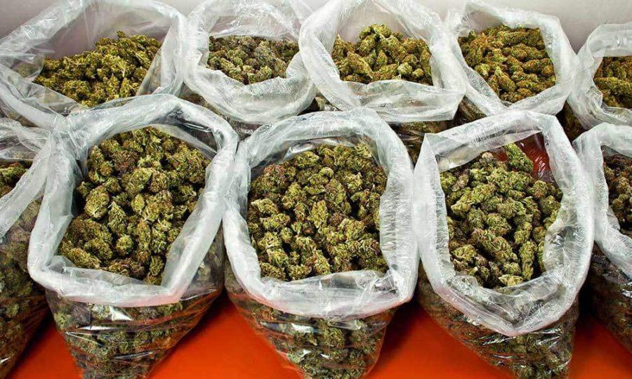 cannabis wholesale - Bulk weed order online
