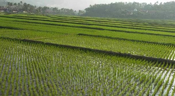 توقعات بانفراج كبير في القطاع الزراعي