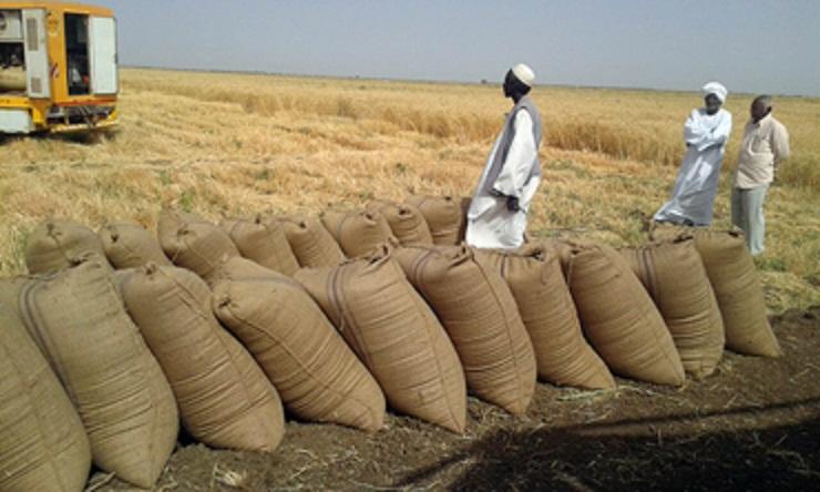 روسيا : السودان ثاني اكبر مستورد للقمح الروسي بعد مصر واتجاه لزيادة حصته ل(2) مليون طن
