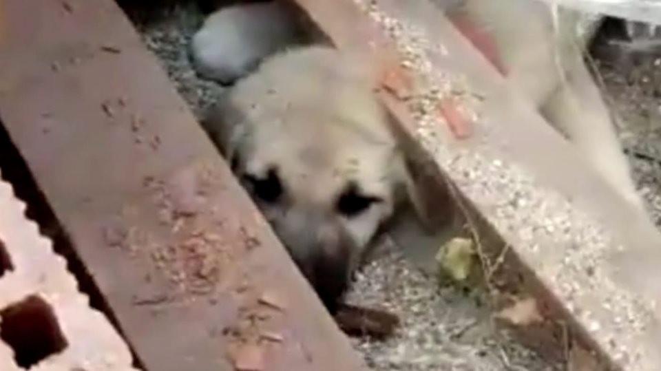 Tuğla yığını arasına sıkışan köpek yavrusu 2 saatte kutarıldı