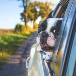 Policja apeluje: nie zostawiajmy zwierząt i dzieci w zamkniętych samochodach