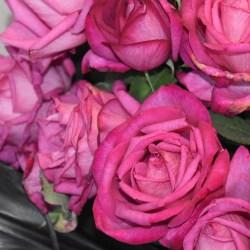 Widzowie wybrali: róża Parole kolejny raz najpiękniejsza