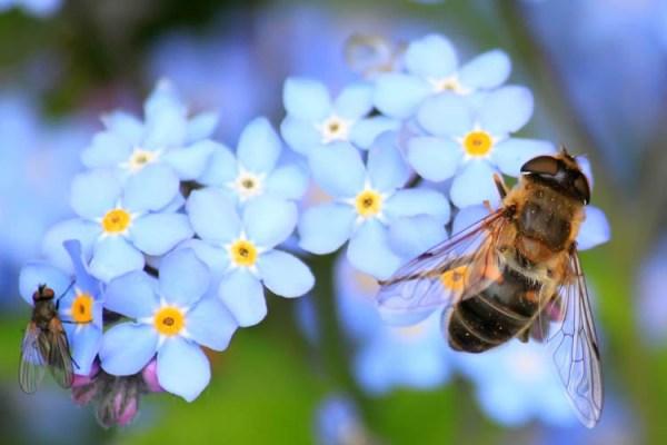 Jak pogodzić interesy rolników i pszczelarzy?