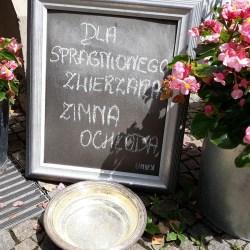 Miska wody dla pupila także w Urzędzie Miasta Kutno