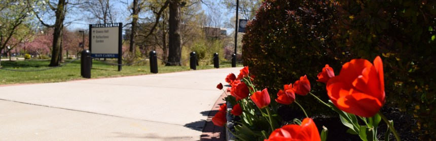Red tulips adorn the pathway towards Downs Hall. Photo: Y. Smishkewych