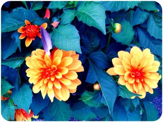 kukkiakiitos