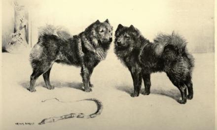 Kutya evolúció – Csau-Csau