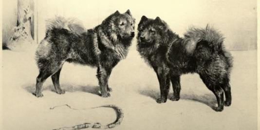 1899 chowk