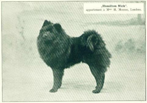 1904 chow