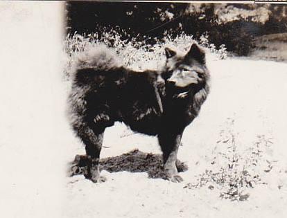 1910 Chow