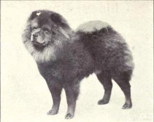 1915 Chow
