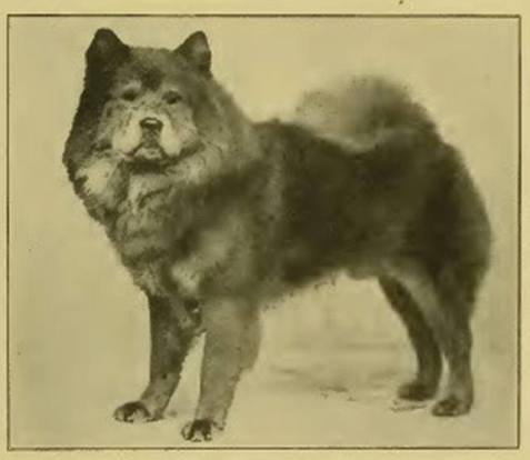 1917 Chow-Chow