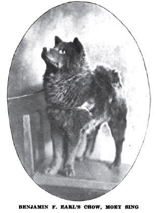 1920 chow