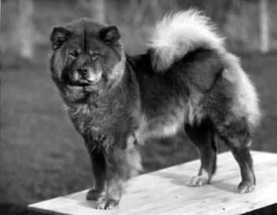 1929 chow