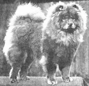 1930 chow