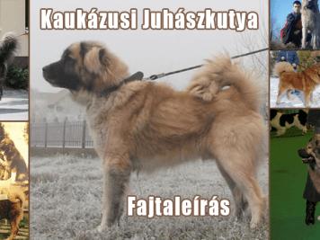 kaukazusi_fajtaleiras