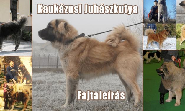 Kaukázusi Juhászkutya fajtaleírás