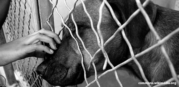 A felelős állattartás - Egy menhelyi kutya vallomása