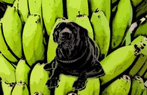 A kutyák és a banán