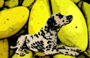 A kutyák és a mangó