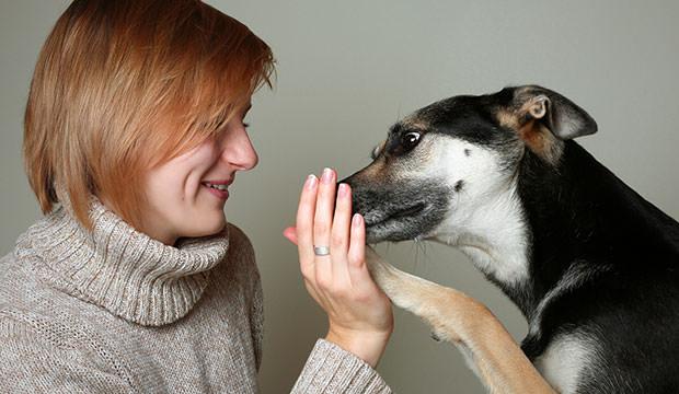 Örökbe fogadni egy kutyát csodálatos érzés