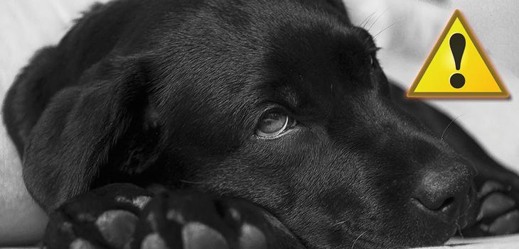 32577a471b85 10 tünet, amit soha ne hagyj figyelmen kívül a kutyádnál! - Kutya Portál
