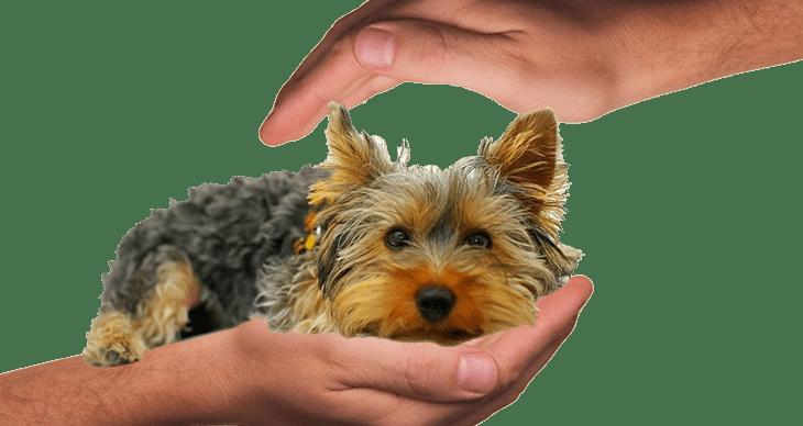 Nyáron is biztonságosan a kutyáddal! Jó tanácsok gazdiknak!