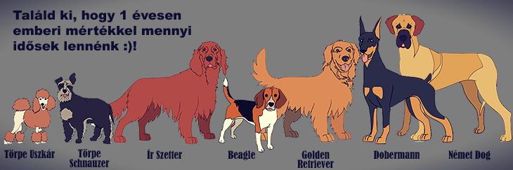 Vajon egyenértékű 1 kutya év 7 emberi életévvel?