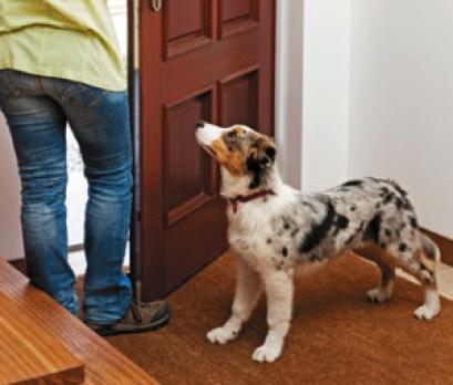Ha hazaérsz, az ajtóban vár és örömmel köszönt