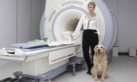 MR-vizsgálatok kutyáknak és macskáknak