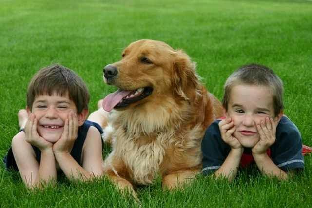 A családi kedvenc erősíti a testvérek közötti köteléket