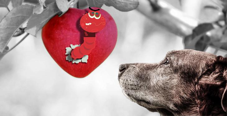 Szívférgesség a kutyáknál