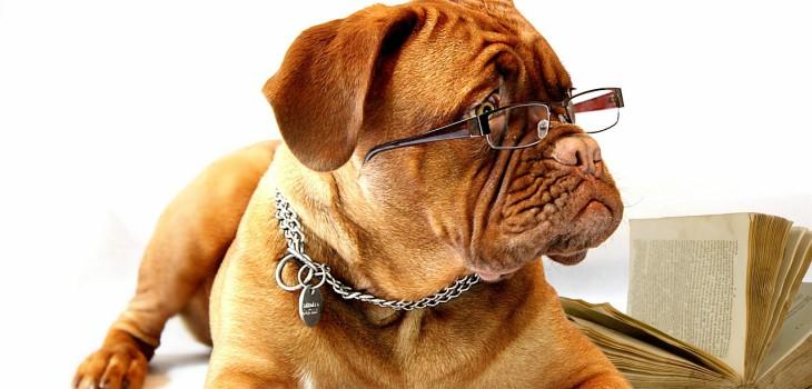 A kutya IQ teszt feltárja a kutyák általános intelligenciáját